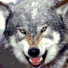 Lord_de_Wolf