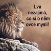 Iam_Macek